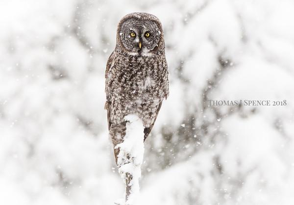 Grey Snowfall