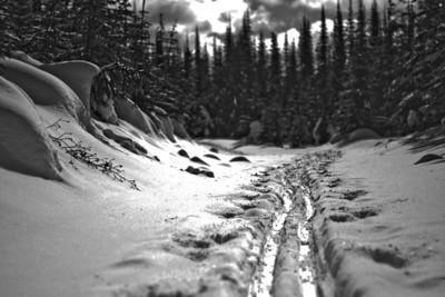 Sun Peaks Powder Tracks