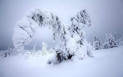 Snowy times
