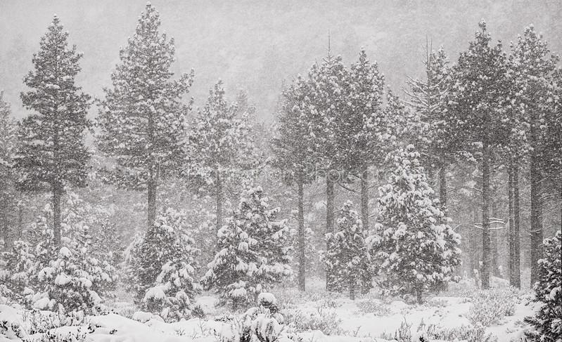Galena Snow