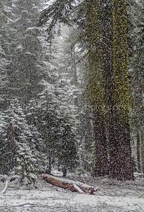 Mt Shasta Wilderness
