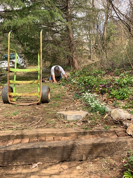 Cleaning the Hellebore Alley 3/16/19
