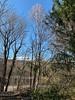 Magnolia in Hesperides, 3/16/19