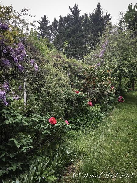 Back path-  unmown but pretty