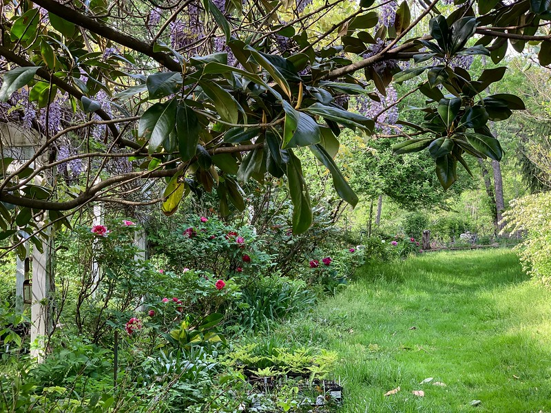 Alley from N door, lawn overgrown, plants for sale, end Apr 2019