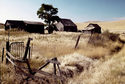 Stephens Farm,  Whitman County, 1982