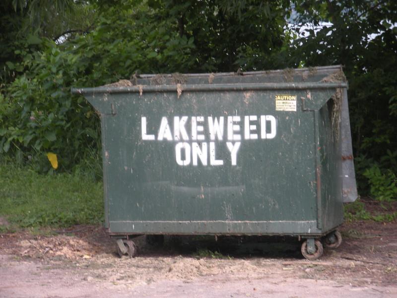 Lakeweed
