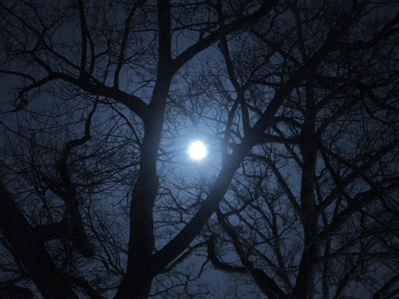 Monona Moon