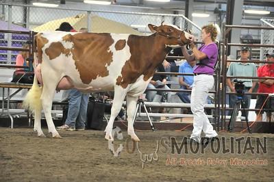 WI Champ R&W Show16-Cows