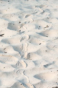Eastern Hog-nosed Snake track in the sandy road