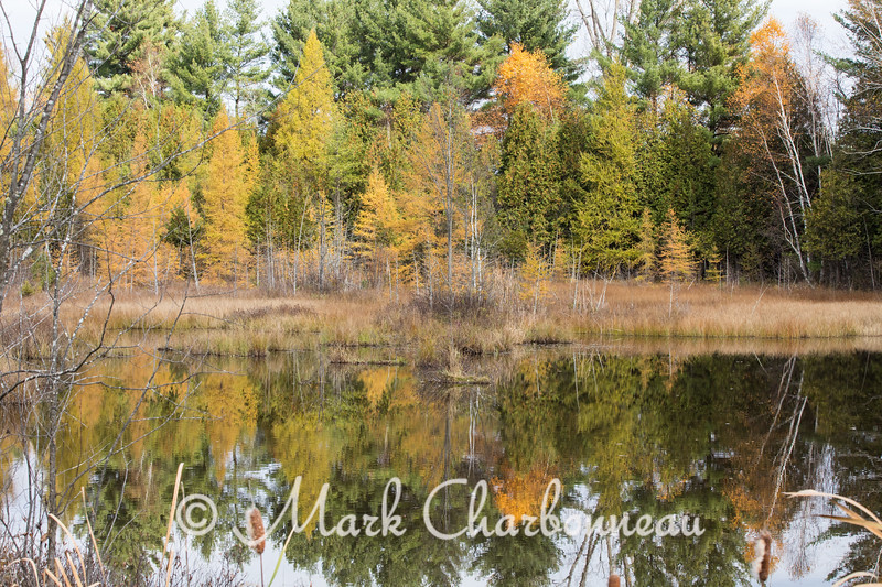 Tamarack Reflections