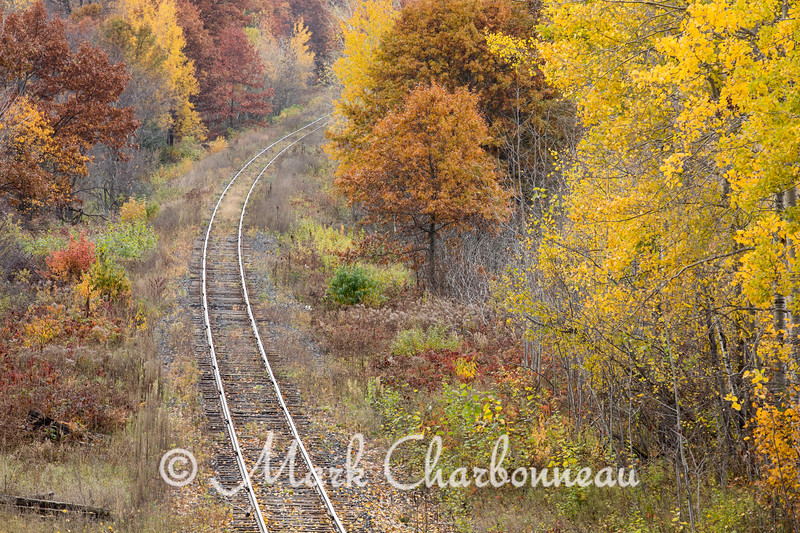 Colors Along The Line