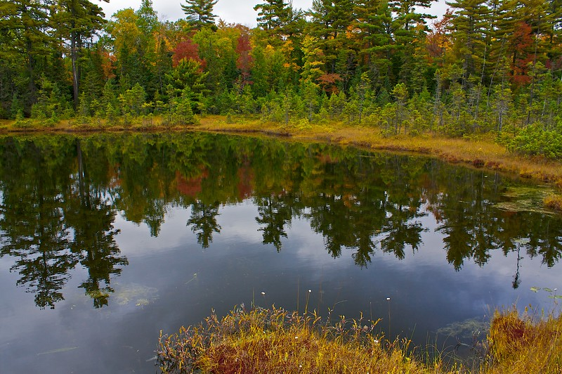 A bog in northern Wisconsin.