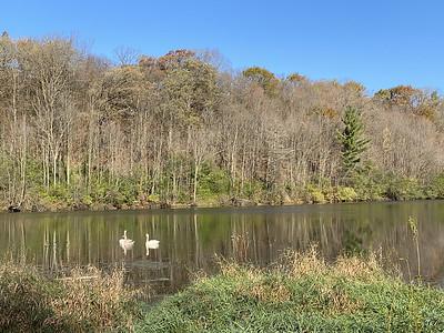 Three swans on Glen Lake.