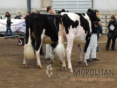 Wisconsin Spring Holstein Cows 15