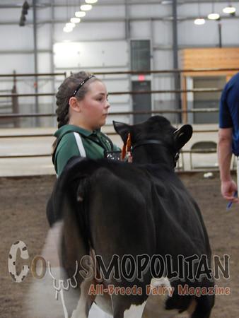 Wisconsin State Holstein Hfr15
