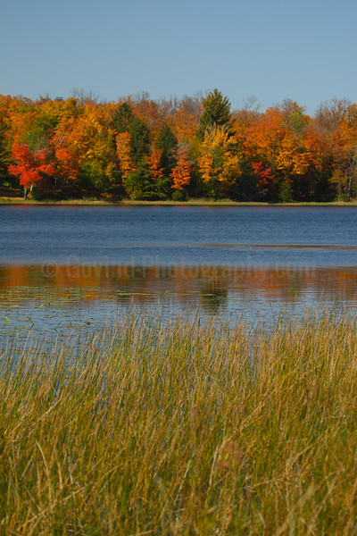 Marsh in Fall
