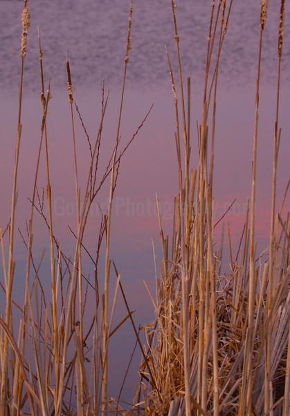 Marsh Growth