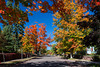 A street with fall foliage color in the maple trees in Bayfield, Wisconsin, USA.