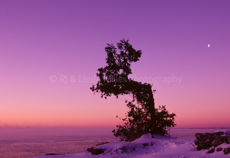 Door County, Witching Tree on Cliff Overlooking Lake Michigan