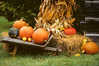 WI050471 Door County - Corn Shocks Pumpkins