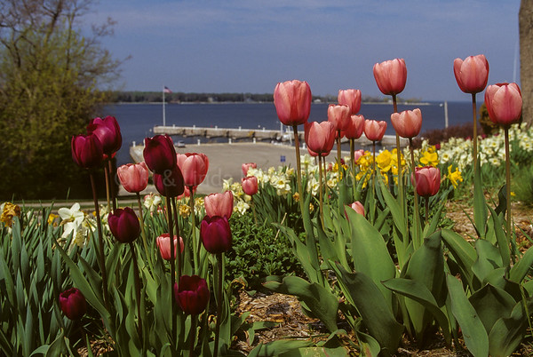 RJLM_WI  43348  Door County Tulips