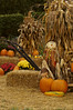 WI050473 Door County - Corn Shocks Pumpkins