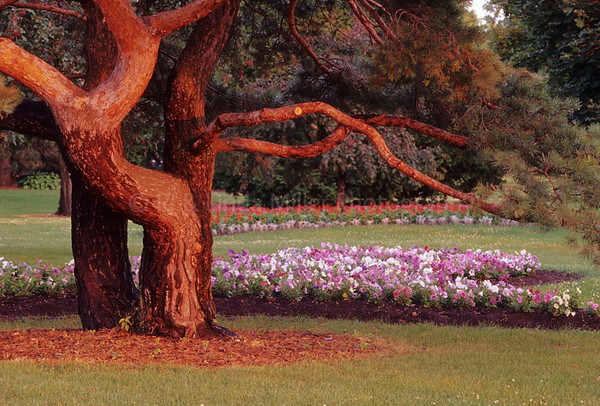 WI032980 Fond du lac - Lakeside Park Tree