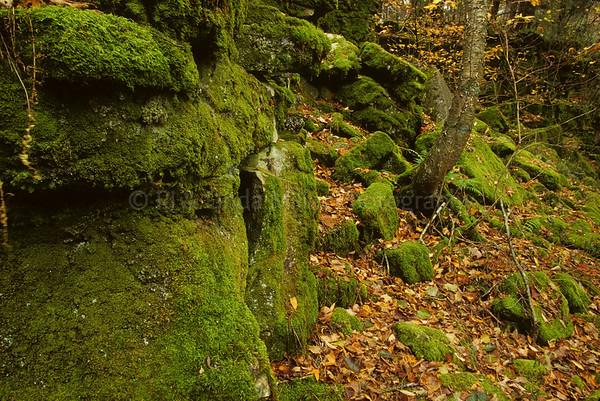 WI050381 Manitowoc County - Moss Maribel Caves County Park