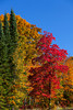 Brilliant fall foliage color in the trees along roadsides and forests of northern Wisconsin, USA.