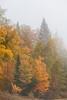 Fall foliage color in the trees in mist and fog along the roadside and forests of northern Wisconsin, USA.