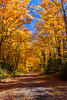 A leaf covered roadway in the forest near Minocqua, Wisconsin, USA.