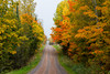 A narrow road through fall foliage color in the trees in northern Wisconsin, USA.