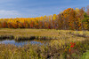 Marshland and fall foliage color in the forests near Minocqua, Wisconsin, USA.