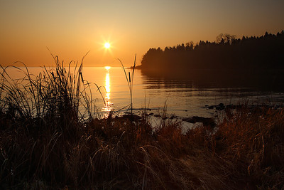 Cattail Gold - Cana Island (Door County - Wisconsin)