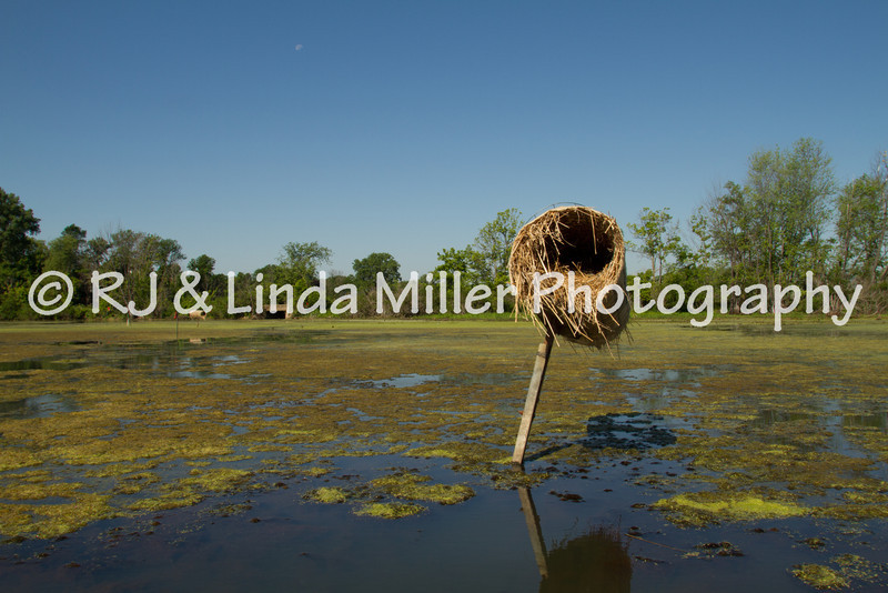 Duck Nest, Myrick Park, La Crosse, Wisconsin