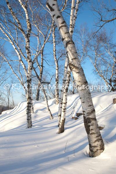 La Crosse County, Onalaska, Green Coulee Park, Winter