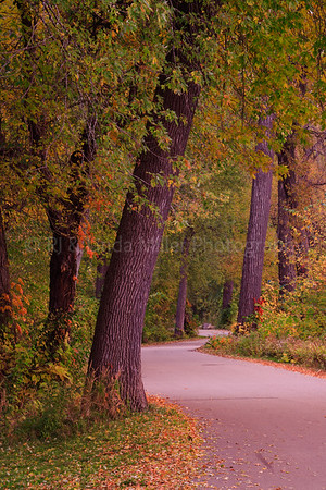 Road Through Pettibone Park