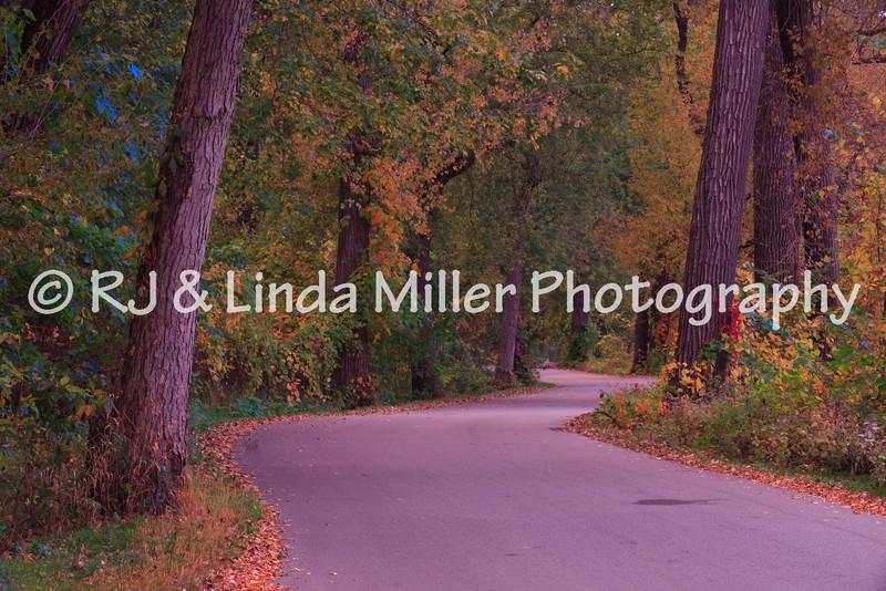 Road Through Pettibone Park