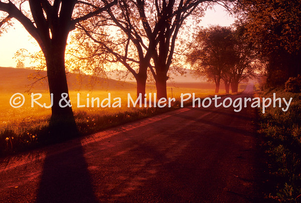 LX000734 LaCrosse - Country Road Sunrise