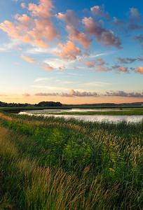 Fleeting By Chance - Theresa Marsh State Wildlife Area (Wisconsin)