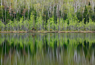 Symmetry of Spring - Spruce Lake (Northern Highland American Legion State Forest - Wisconsin)