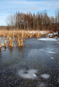 Iced - Kettle Moraine State Forest (Northern Unit)