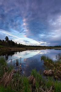 Spring Awakens II - Nixon Creek (Northern Highland American Legion State Forest - Wisconsin)