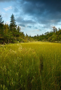 Clearing Swale - The Ridges Sanctuary (Door County - Wisconsin)
