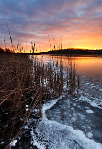 Taking Hold - Long Lake (Kettle Moraine State Forest - Northern Unit)