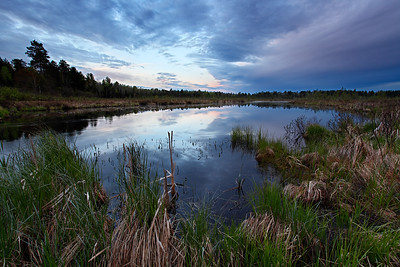 Spring Awakens - Nixon Creek (Northern Highland American Legion State Forest - Wisconsin)
