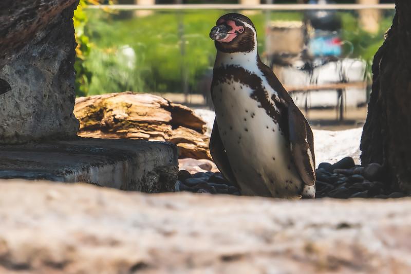 Penguin at Milwaukee County Zoo in Milwaukee Wisconsin