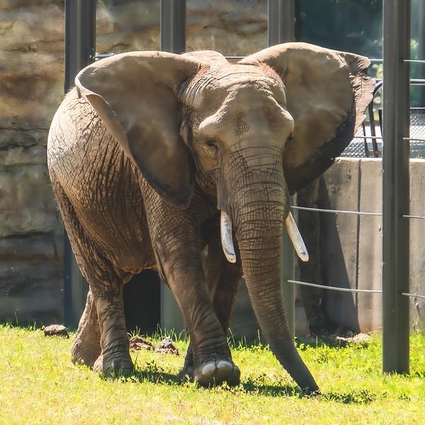 Elephant at Milwaukee County Zoo in Milwaukee Wisconsin