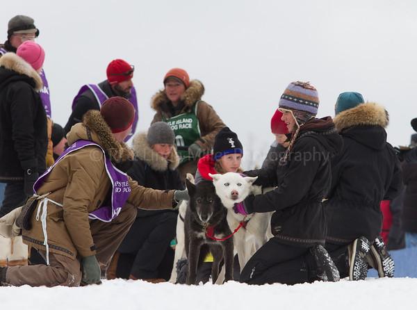Mushing Sled Dogs, Apostle Island Sled Dog Races, Bayfield County, Wisconsin